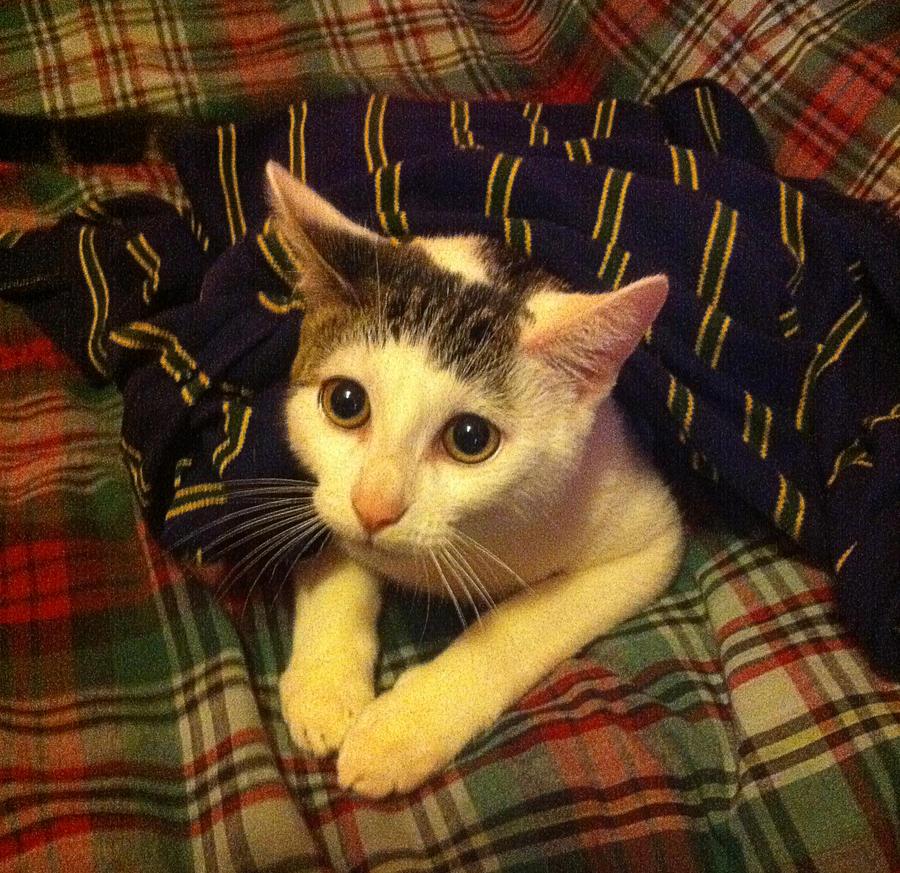 Arthur as a kitten by Thatguyuare
