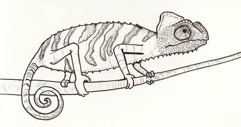 Chameleon by jaimeiniesta