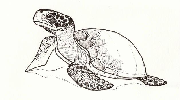 Turtle by jaimeiniesta