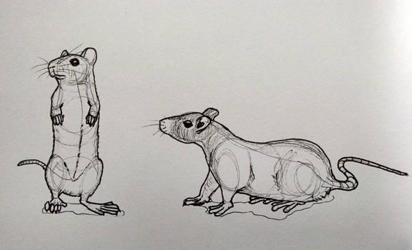 Rats by jaimeiniesta