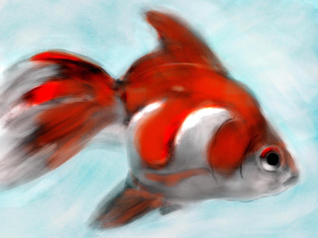 Goldfish2 by jaimeiniesta