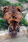 Lormet_Zoo-Animal-0446