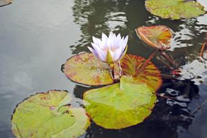 Lormet_Flowers-Plants-FL0075