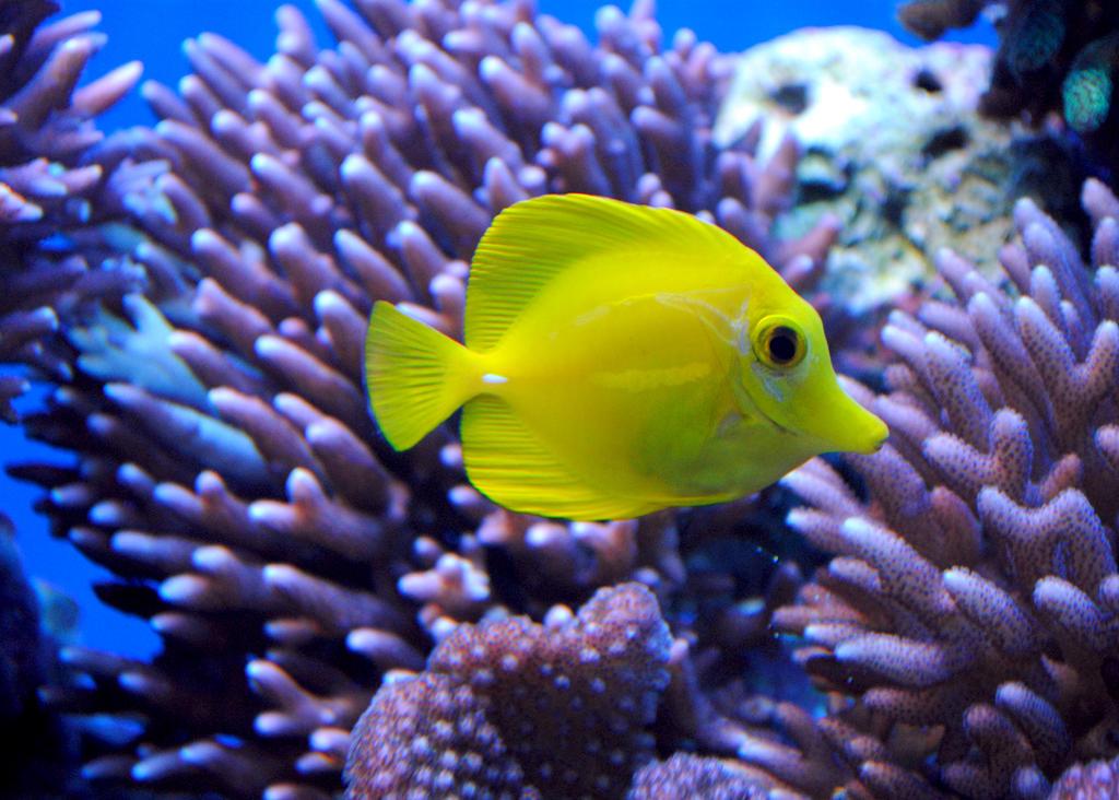 Lormet-aquarium-0254sml by Lormet-Images