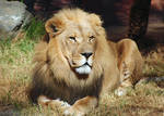 Lormet-Zoo-Animals-0076D-sml