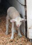 Lormet-Farm-Animals-0265B-sml