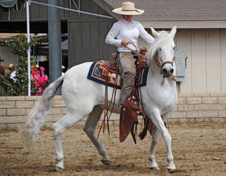 Lormet-Equestrian-0023B-sml by Lormet-Images