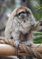 Lormet-Zoo-0321b-sml by Lormet-Images