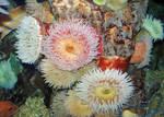 Lormet-Aquarium-0084E-sml