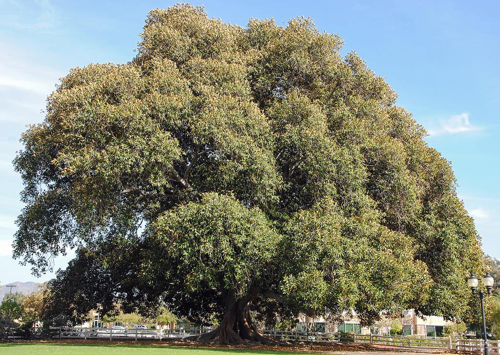 Lormet-Tree-0281C-sml by Lormet-Images