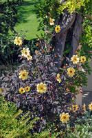 Lormet-Springtime-0185J-4sml by Lormet-Images