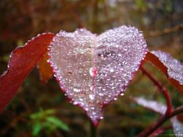 .:FRESH HEART:. by MarcosRodriguez