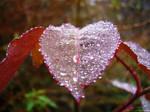 .:FRESH HEART:.