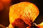 Autumnia III