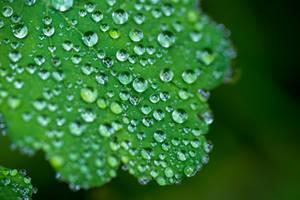 minty green by MarcosRodriguez