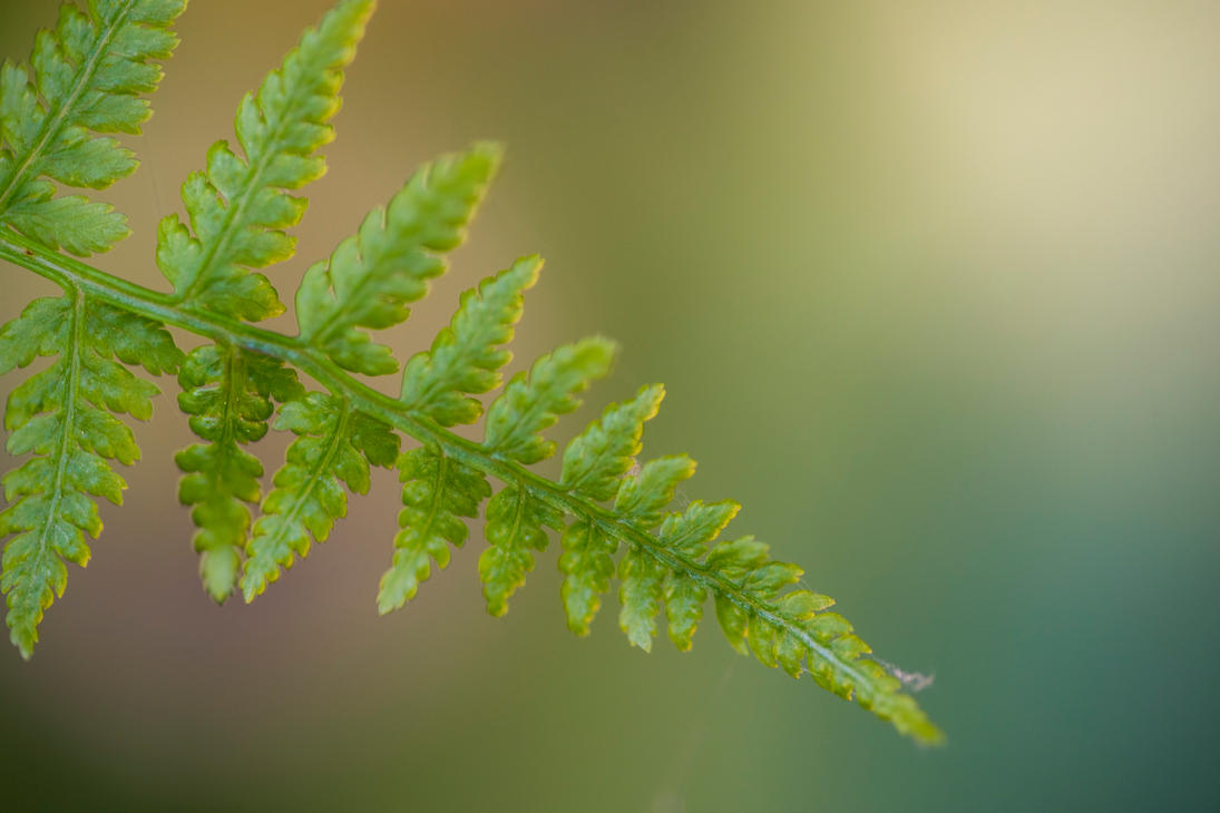 young fern by MarcosRodriguez