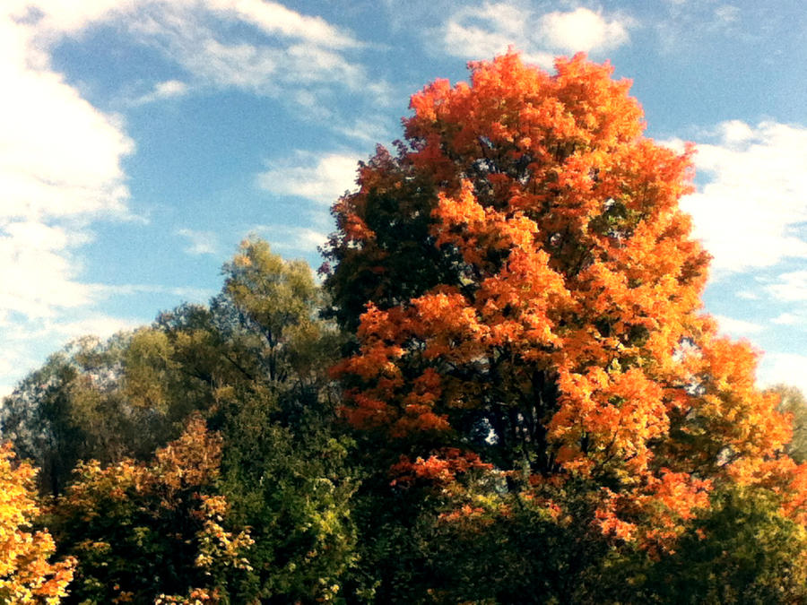 Fall Colours by Than1Ducis