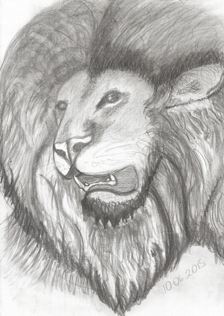 Lion by fascinus