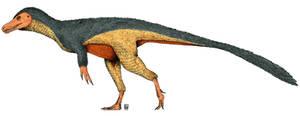 The Herrera's Lizard