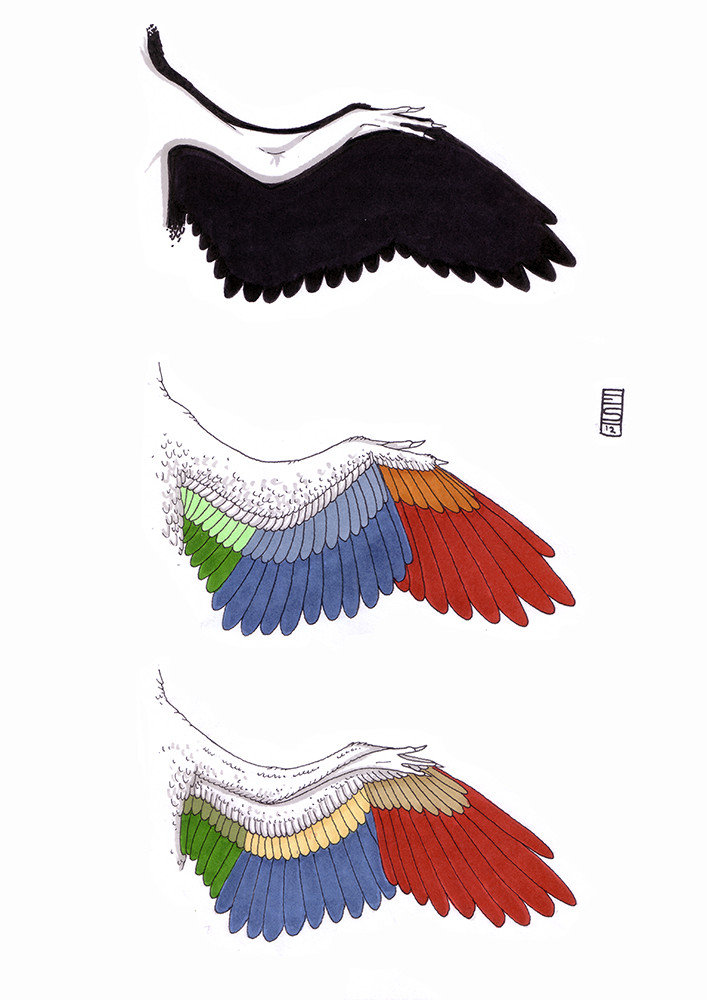 Contemporary Bird Feather Anatomy Crest - Human Anatomy Images ...
