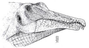 Spinosaurus - Pencil by Smnt2000