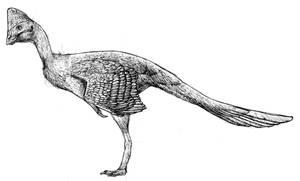 The Bird Demigod in Pencil