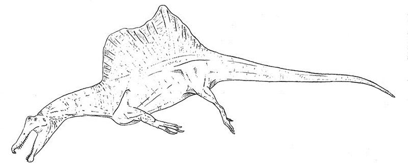 Spinosaurus Lineart by Smnt2000