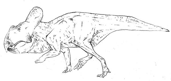 Protoceratops Lineart by Smnt2000