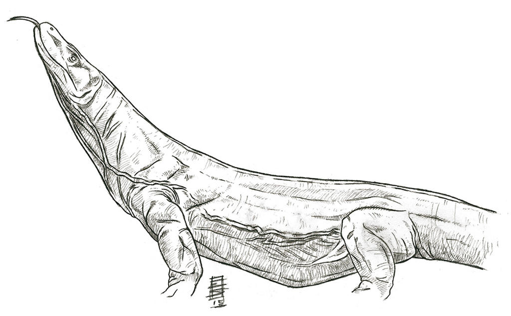 Komodo Dragon Quick Study by Smnt2000