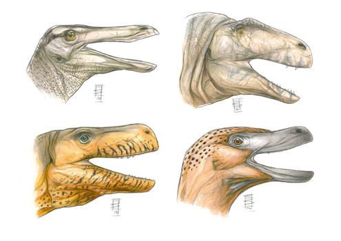 Theropod Head Panoply