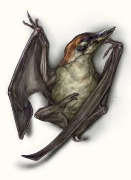 Exercise_Fictional Pterosaur