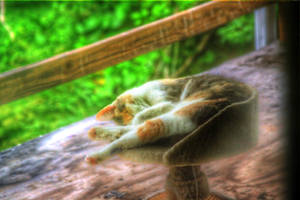 Tone-Mapped HDR Kitty