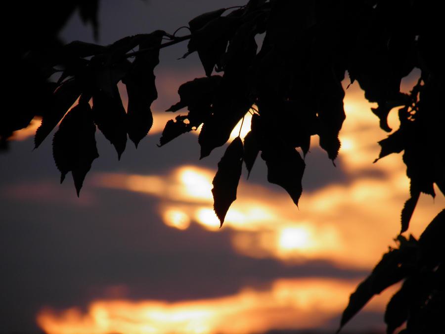Shy sun by antoniavs