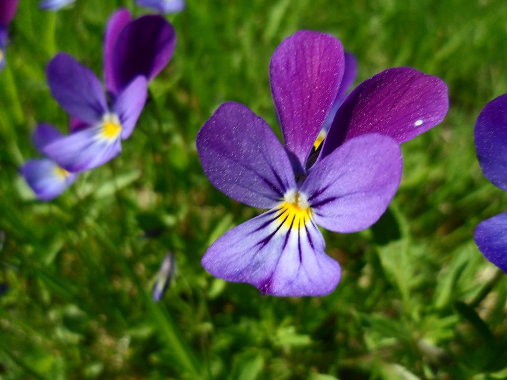 Small purple flower by AllexNordgren on DeviantArt