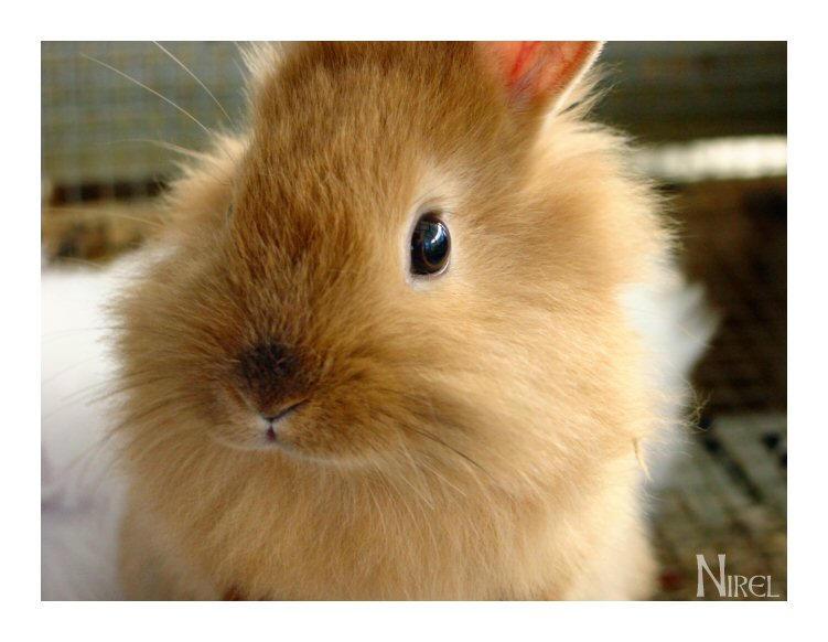 Mr  Rabbit by nirel