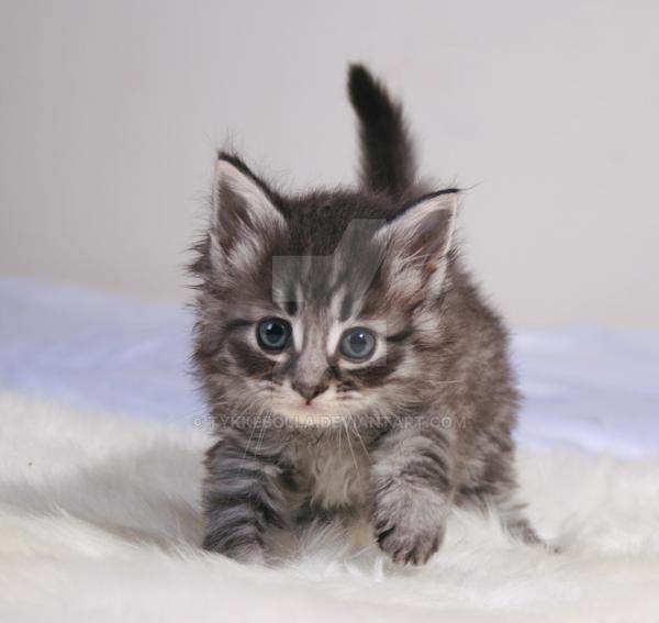 Cute kitten by Tykkebolla