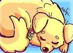 Dreams Of Pups