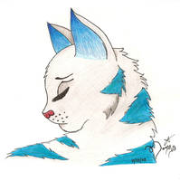Warrior Cats Silverstream by Dawnstar-of-EchoSong