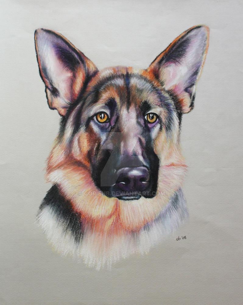 Bo German Shepherd portrait by corienb