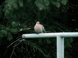 Chilln Bird by euphoricallydead