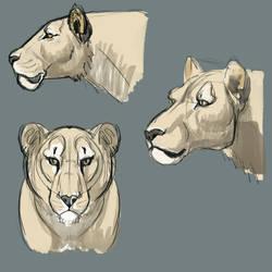Lioness Head Study by PinkPonyFarts