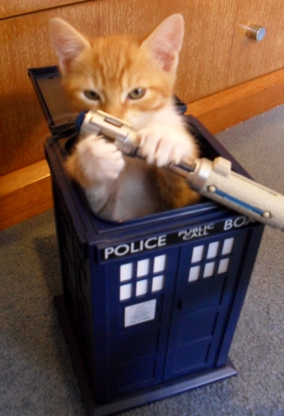 The Kittens Have The Tardis! by daedric-darling