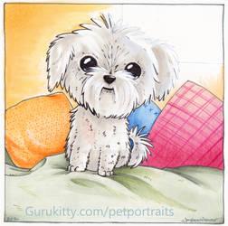 Fluff Pup Pet Portrait