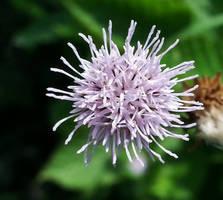Wildflower Macro by Matthew-Beziat