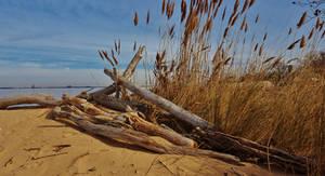 Fort Smallwood Driftwood Beach Scene by Matthew-Beziat