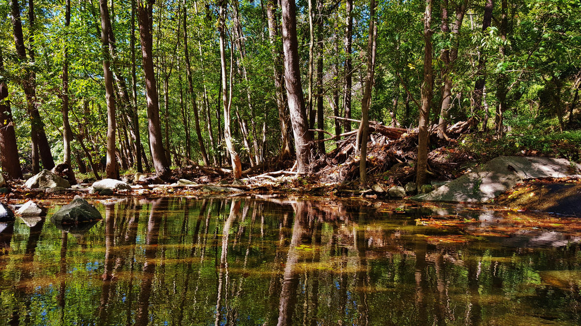 Avalon Forest Reflections by Matthew-Beziat