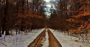 Telegraph Road Winter Forest Scene 2018