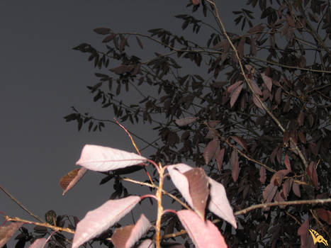 Planet Eve - Tree 1