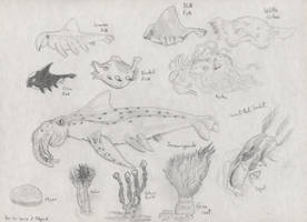 Midgard - Key Sea Life by Tapejara