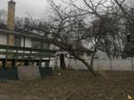 Springtime in Winnipeg by Tapejara